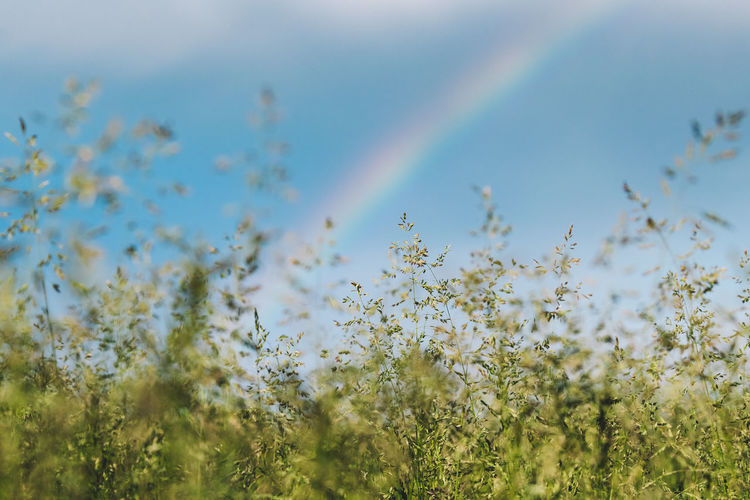 Scenic view of rainbow on field against sky