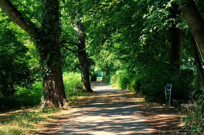 Halle (Saale) Beauty In Nature Day Green Color Growth Halle (Saale) Nature No People Outdoors Peißnitzinsel Road Scenics The Way Forward Tranquil Scene Tranquility Tree Neighborhood Map Live For The Story