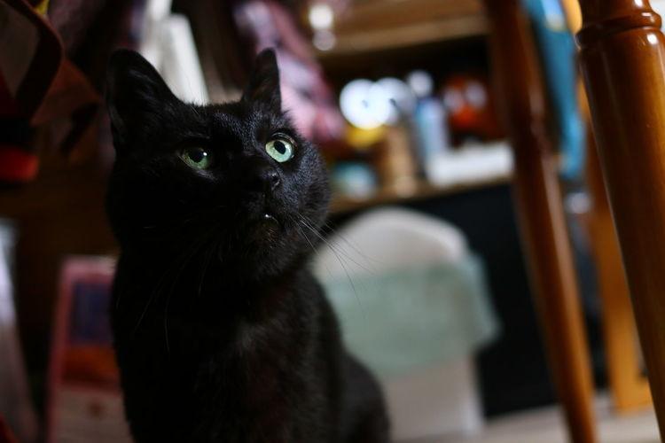 週末の天気予報が気になるニャー😿 Pets Feline Domestic Cat Portrait Black Color Looking At Camera Close-up Animal Eye Cat Eye Stray Animal