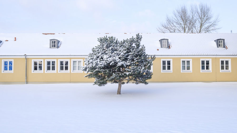 Snow covered tree and building against sky