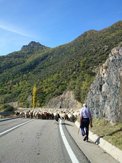 Road Real People Outdoors One Person Rear View The Way Forward Mountain Day Men Adult One Man Only People Landscape Beauty In Nature Nature Only Men Sheep Sheepherd Flock Of Sheep Flock Catalonia Working Work Investing In Quality Of Life This Is Aging