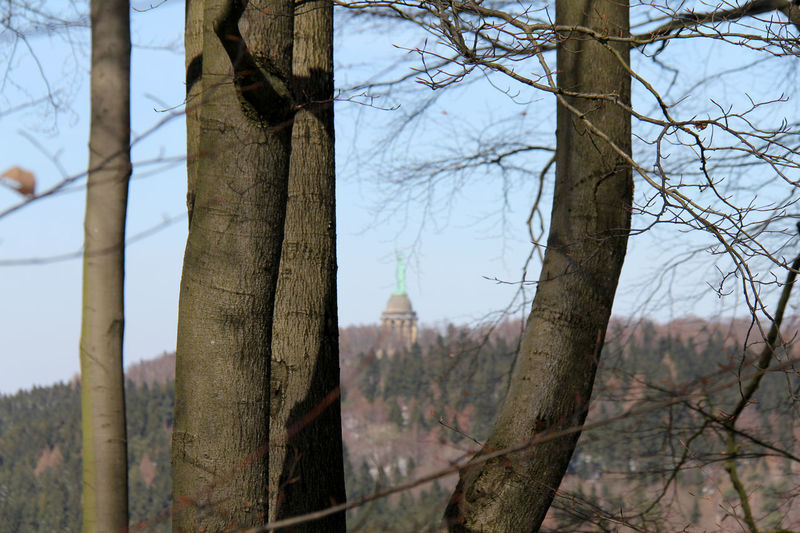 Bielstein Grotenburg Heiligenkirchen Hermannsdenkmal Hiddesen Ostwestfalen-Lippe Berlebeck Day Detmold Forest Forestwalk Land Nature No People Ostwestfalen Outdoors Plant Sendemast Tranquility Tree Wanderung Winter Wonderland