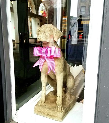 Doggy in the Window Looking Through Window Store Window Outdoors Lifestyles Day Building Exterior