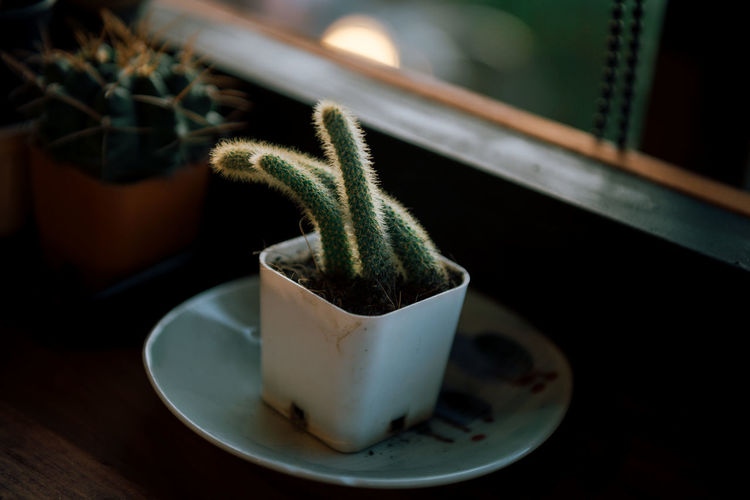 Cactus wiht me 🌵 Cactus Close-up No People Plant Green Focus On Foreground Table Filling Alone Day Flower Pot Wood - Material Potted Plant Green Color Growth Indoors  Selective Focus Succulent Plant Still Life Houseplant Food And Drink Nature Leaf Lifestyles Photograpy Nikonphotography Capture Tomorrow My Best Photo