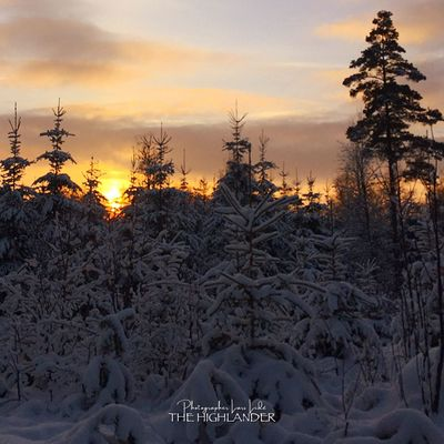 Cold Temperature Winter Snow Nature Tree No People Sunset Outdoors Beauty In Nature Frozen Landscape Sky Shades Of Winter