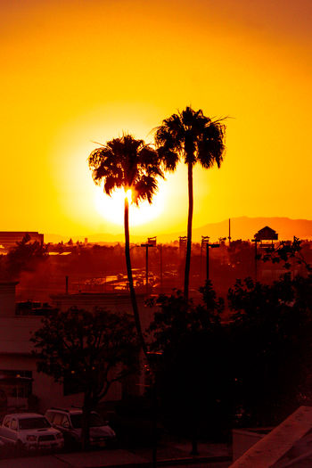 Sunset in Cali Architecture Beauty In Nature Building Exterior Built Structure Clear Sky Coconut Palm Tree Growth Nature No People Orange Color Outdoors Palm Tree Plant Scenics - Nature Silhouette Sky Sunset Tranquil Scene Tranquility Tree Tropical Climate Tropical Tree