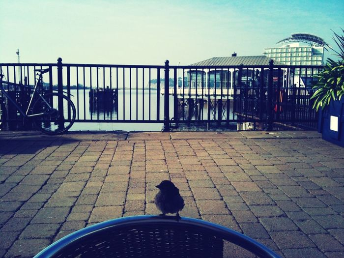 Mosche Cardiff Bay Bird