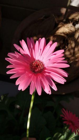 No Filter Flower Beautiful Freshness Pink