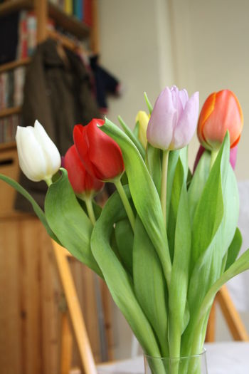 Tulips Beauty In Nature Close-up Flower Flower Head Indoors  Nature Plant Tulip