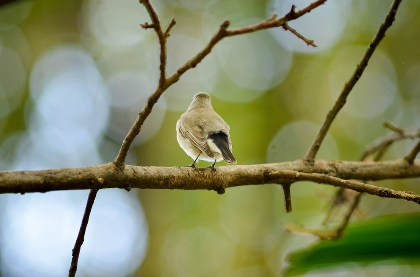 Animal Animal Themes Animals In The Wild Avian Beak Beauty In Nature Bird Branch Day Focus On Foreground Nature No People One Animal Perching Selective Focus Small Tranquility Wildlife Zoology