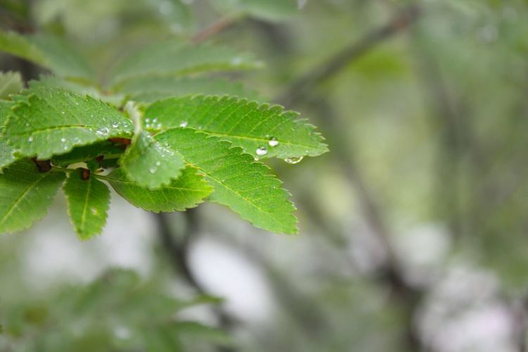 Leaf Plant Part Green Color Plant Growth Close-up Beauty In Nature Focus On Foreground Drop Leaves