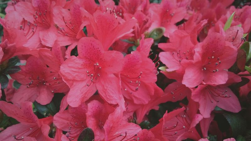 Something Special Flowers Nature_collection Dark Pink By Motorola EyeEm Nature Lover Red Flower Collection Plants And Flowers How Do We Build The World? Showcase March Q Millennial Pink