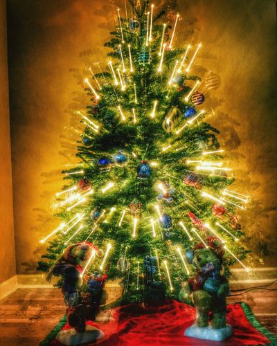 What's On Your Tree? Taking Photos Check This Out Eye4photography