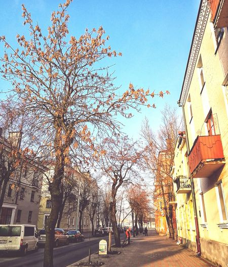 Зіма беларуская... Tree Sky City Nature Sunset Day Beauty In Nature Architecture Winter Belarus Brest 2016