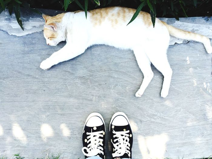 Jalanan Grounds Grey First Eyeem Photo EyeEm Nature Lover The Path Less Traveled By Pointer Footwear IPhoneography Eyeemphoto Shoes Pets Outdoors Green Sleeping Cat Fashion Shoes Sneakers Cat Shootermag Sleeping Pet Floor Foot Bright Colors Creative Polkadot Out Of The Box