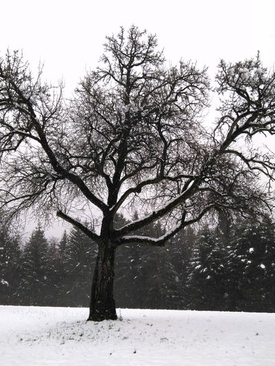 tree covered with snow Branches Old Tree Tree Winter Wintertime Beauty In Nature Branch Clear Sky Cold Temperature Coldday Covered In Snow Day Landscape Nature No People Outdoors Scenics Snow Snow Covered Snowing Snowy Tranquility Tree Winter Winter Trees