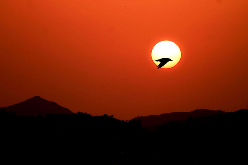Beauty In Nature Bird Clear Sky EyeEm Gallery Fliying Birds Mountain Nature Orange Color Outdoors Scenics Silhouette Sun Sunset Sunset Silhouettes Sunset_collection Tranquil Scene Tranquility Capture The Moment