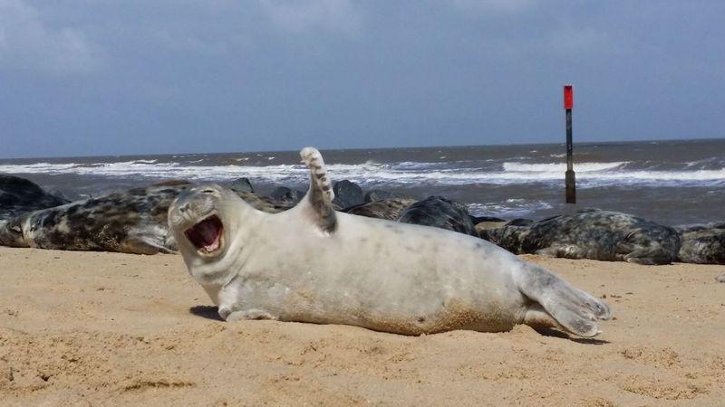 """Hi there"" Water Sea Beach Sand Pets Sea Life Dog Sea Lion Animal Themes Sky Seal - Animal Coastline Aquatic Mammal Seal"