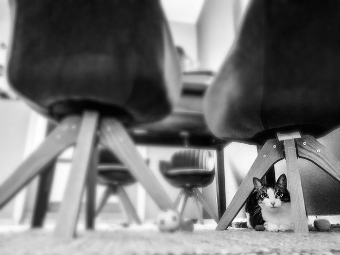Cat Cats Of EyeEm Cat Lovers Cat Photography Black And White Collection  Cat Watching Cat Cat Black And White Close-up