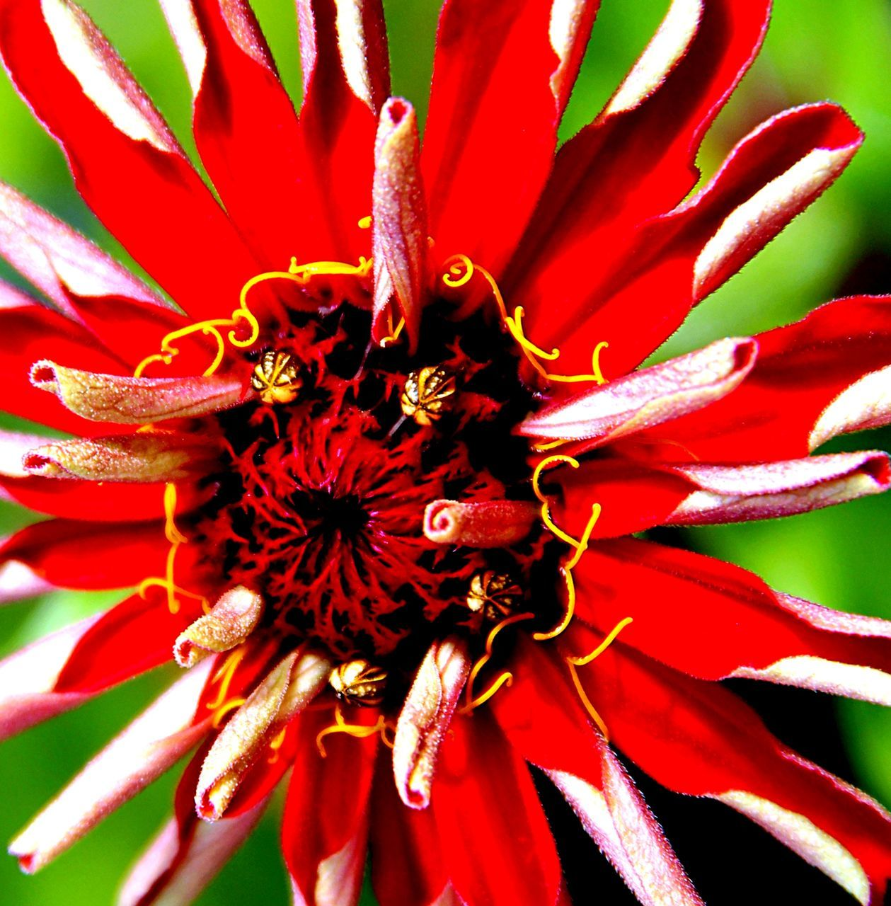 flower, petal, growth, red, flower head, beauty in nature, fragility, freshness, nature, pollen, close-up, no people, plant, outdoors, stamen, day, blooming, animal themes
