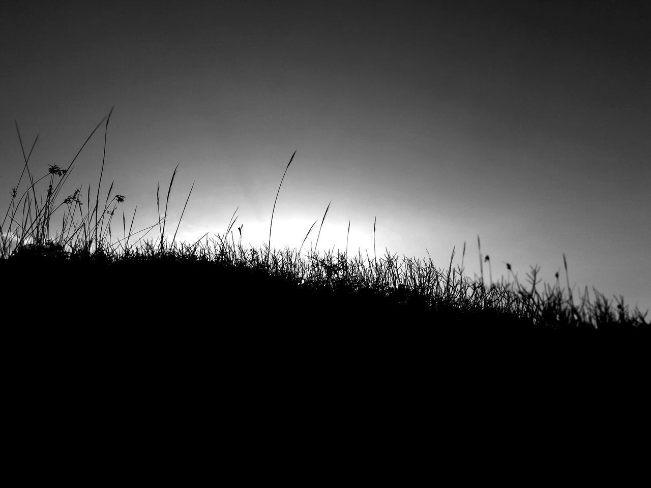 SILHOUETTE PLANTS ON LAND AGAINST CLEAR SKY