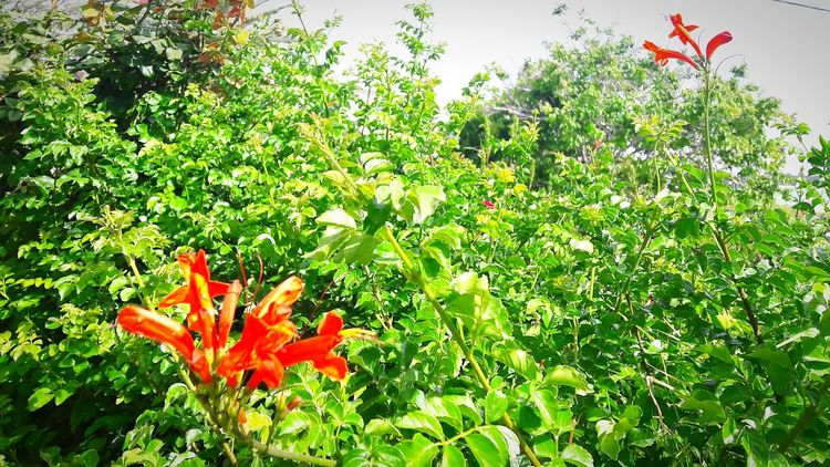 Flowers My Garden @my Home Beauty Of Nature Nature Photography Nature Beauty Beautiful Colors Taking Photos ❤ Simply Beautiful