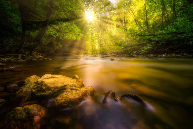 Beauty In Nature Day Flowing Flowing Water Forest Growth Land Nature No People Non-urban Scene Outdoors Plant River Rock Scenics - Nature Sunbeam Sunlight Surface Level Tranquil Scene Tranquility Tree Water