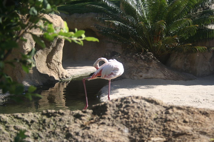 Animal Bioparco Bird Day Flamingo No People Outdoors Pink Rock Surface Level Valencia, Spain Water