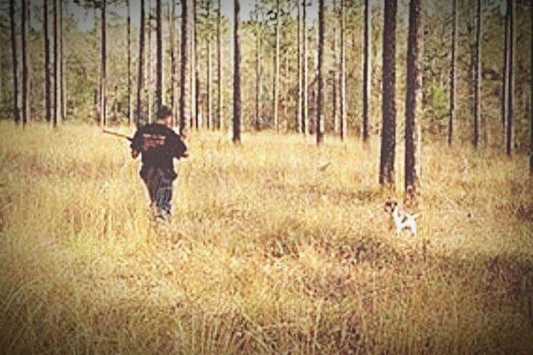 Quail Hunt Birddog The Best Friend German Shorthaired Pointer Dogslife Pookie  Dogsofeyeem