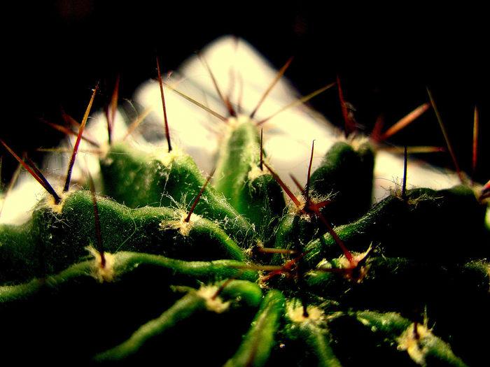 Только растения