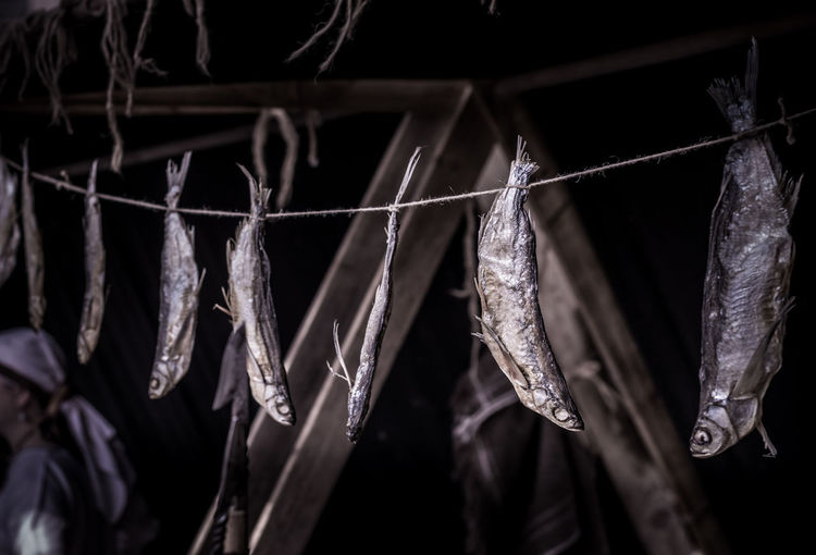 Close-Up Of Dry Fishes Hanging At Night