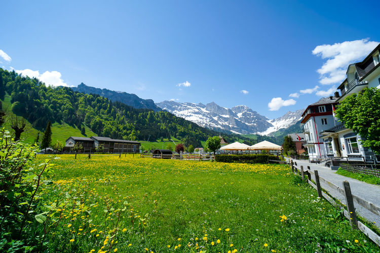 beautiful engelberg town and village Field Flowers Mount Titlis Switzerland🇨🇭 Vacations Alps Architecture Beauty In Nature Building Building Exterior Built Structure Day Engelberg Environment Field Flower Grass Green Color House Land Landscape Lavender Mountain Mountain Range Nature No People Outdoors Plant Rejuvenation River Rotary Scenics Scenics - Nature Sky Snow Sunny Day Travel Destinations Tree Truebsee