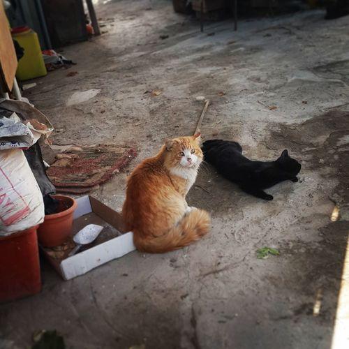 Cats #cutecats