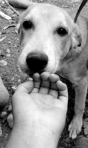 Dog Love Sweetfriend