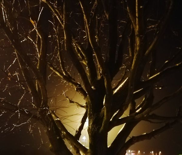 tree in the night light