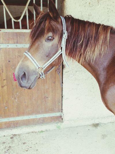 petit poney <3