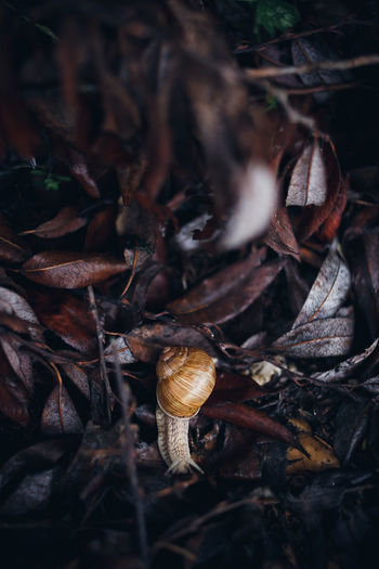 Close-up of snail on dry leaves
