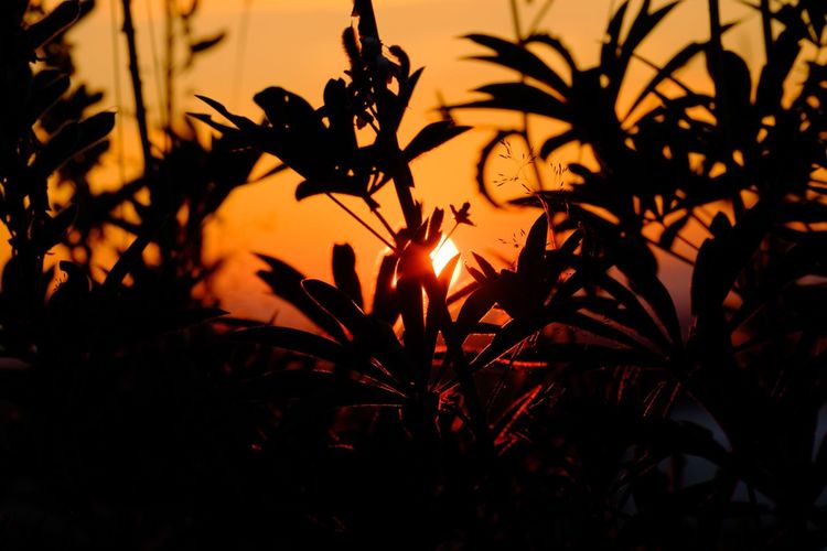 Showcase July Sun Sunset Sunset_collection Sunrise Cute Leafs Eye4photography  My Favorite Picture  Hollidays Summer Leaf Nature's Diversities Nature_collection Orange 43 Golden Moments