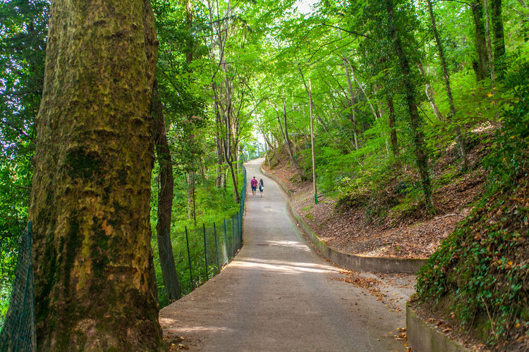 The road to villa del balbianello in lenno, lombardy, italy on lake of como, with trees and wood