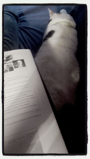 Cat Lazy Homework