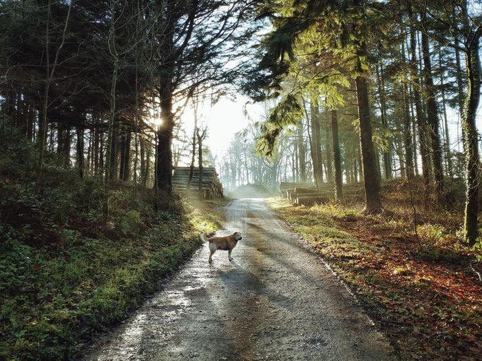 View of dog on footpath in forest