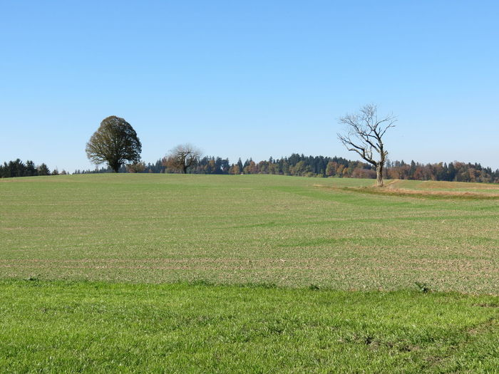 Emmental🇨🇭 Lueg-Affoltern Walk Photography October 2017 Agriculture Bare Tree Beauty In Nature Clear Sky Day Field Grass Green Color Growth Landscape Nature No People Outdoors Rural Scene Scenics Sky Tranquil Scene Tranquility Tree Perspectives On Nature