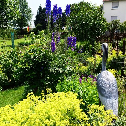 Sommer Sonne Weekend Nature and Garden Photography Flowers,Plants & Garden Urlaub