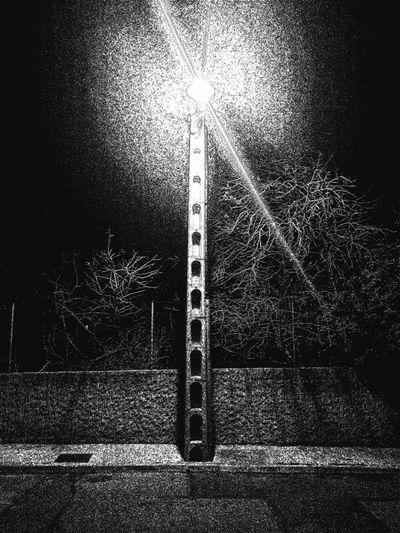 No People Street Night Nightlight Trees