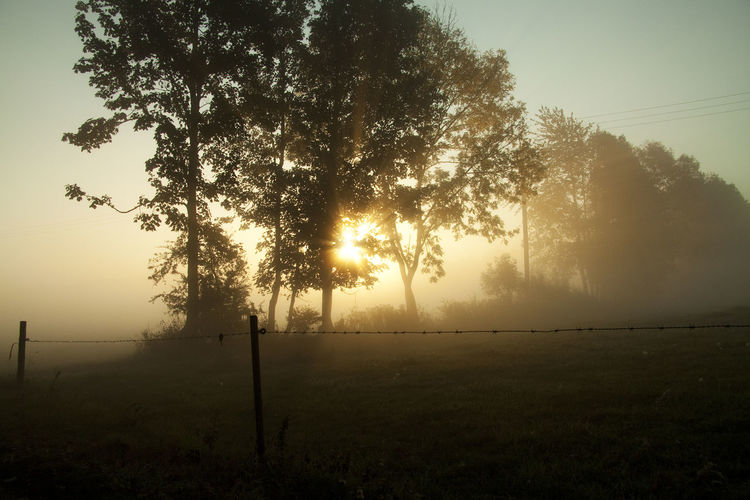 Sunup on misty morning Beauty In Nature Day Fog Foggy Foggy Morning Grass Hazy  Landscape Misty Misty Landscape Misty Morning Nature No People Outdoors Scenics Silhouette Sun Sun Rays Sunlight Sunset Sunset Silhouettes Tranquil Scene Tranquility Tree The Great Outdoors - 2017 EyeEm Awards