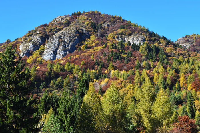 Autumn! Autumn Beautiful Day Beauty In Nature Bluesky Brautiful View Colors Green Italy Landscape Mountain Yellow