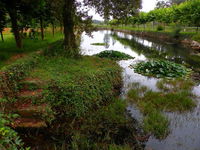 Agua Beauty In Nature Escalera Escaleras En Piedra Forest Grass Green Color Growth Hiedra Lago Landscape Naturaleza Nature No People Outdoors Plant Reflection Remanso Rio River Scenics Tranquil Scene Tranquility Tree Water