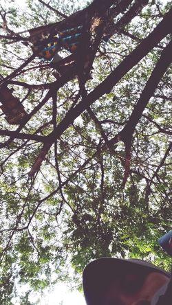Unair Campus C Surabaya City Home Birds Birds🐦⛅ Nature Outdoors Tree Love To Take Photos ❤ Surabaya Surabaya In The Morning Love Nature