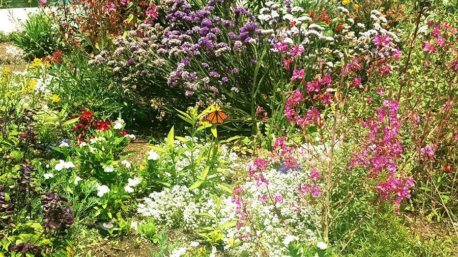 Butterfly Garden First Eyeem Photo