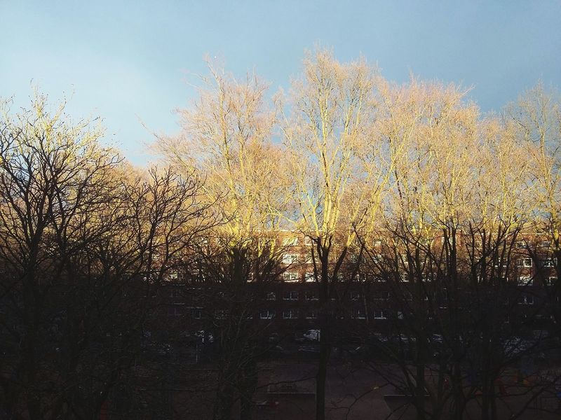 Winter Sun. · Hamburg Germany 040 Winter Sun Sun Shade Light And Shadow Lighting Cut Off  Trees Tree Crowns Plaza